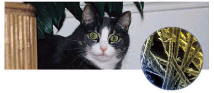 Cat dander Allergy Testing Treatment Dallas Fort Worth Plano Texas