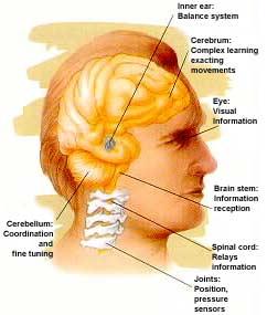 Balance inner ear ent docsent docs ccuart Images